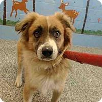 Adopt A Pet :: A489400 is in danger at San Bernardino City - Beverly Hills, CA