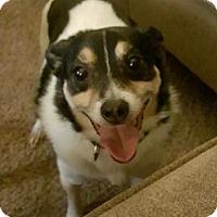 Adopt A Pet :: Max - Union Grove, WI