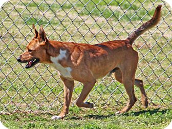 Terrier (Unknown Type, Medium) Mix Dog for adoption in Savannah, Tennessee - Whaley