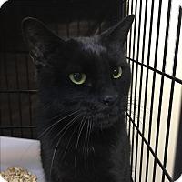 Adopt A Pet :: Panther - Medford, MA