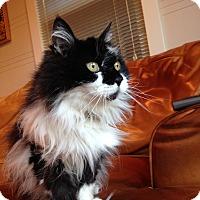 Adopt A Pet :: Gaby - Novato, CA