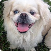 Adopt A Pet :: Dora - Fennville, MI
