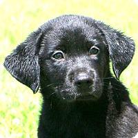 Adopt A Pet :: Larry~ meet me! - Glastonbury, CT