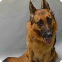Adopt A Pet :: CHASE - Tully, NY