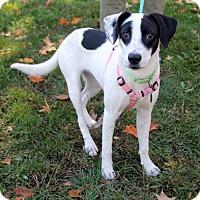 Adopt A Pet :: Marley - Harrison, NY