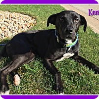 Adopt A Pet :: Kenya - Elburn, IL