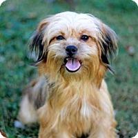 Adopt A Pet :: SHAYE - Norfolk, VA