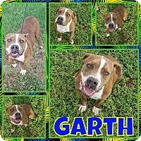 Adopt A Pet :: Garth - New Milford, CT