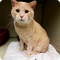 Adopt A Pet :: C-21 - Indianola, IA