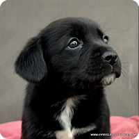 Adopt A Pet :: ASIA/ADOPTED - parissipany, NJ