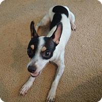 Adopt A Pet :: Sophia - Oakland Park, FL