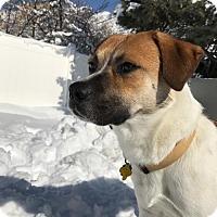 Adopt A Pet :: Marlon - Salt Lake City, UT