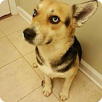 Adopt A Pet :: Skylar - Monroe, NC