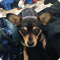 Adopt A Pet :: Mickey - Odessa, TX