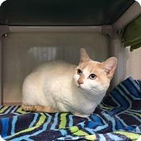 Adopt A Pet :: Sylvia - Fort Collins, CO