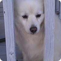 Adopt A Pet :: Bernie of Murphy, NC - Mooresville, NC
