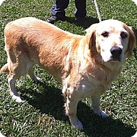 Adopt A Pet :: Heather - Cheshire, CT