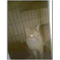 Adopt A Pet :: Milo - Owasso, OK