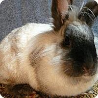 Adopt A Pet :: Talula - Newport, DE