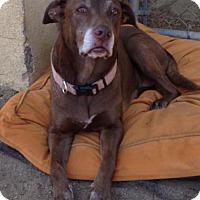 Adopt A Pet :: Sadie 1 - San Diego, CA