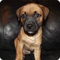 Adopt A Pet :: Jack - Huntsville, TN