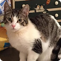 Adopt A Pet :: Chia - East Hanover, NJ