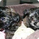 Adopt A Pet :: Freddie (Avaiable) & Frankie (ADOPTION PENDING!!)