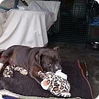 Adopt A Pet :: Lucky - Sacramento, CA