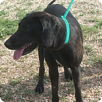 Adopt A Pet :: Presley - Post, TX