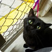 Adopt A Pet :: Jag - North Kingstown, RI