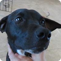 Adopt A Pet :: Cassidy - St Petersburg, FL