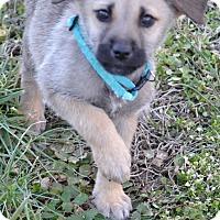 Adopt A Pet :: Ezra - Albemarle, NC