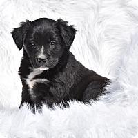 Adopt A Pet :: Rae - Groton, MA