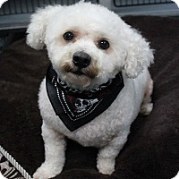 Adopt A Pet :: Toby - New Oxford, PA