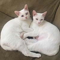 Adopt A Pet :: Hansel and Gretal - Homewood, AL