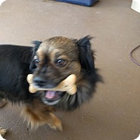 Adopt A Pet :: Steinberg - Windermere, FL