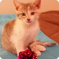 Adopt A Pet :: Bunni - North Highlands, CA
