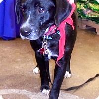 Adopt A Pet :: Adam - Elyria, OH