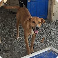 Adopt A Pet :: Freedom - Lewisburg, TN