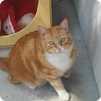 Adopt A Pet :: Sketchers - El Cajon, CA