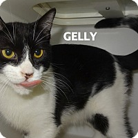 Adopt A Pet :: Gelly-laid back! - Lapeer, MI