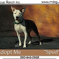 Adopt A Pet :: Spuds - Yreka, CA