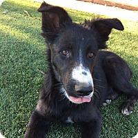 Adopt A Pet :: DART - San Pedro, CA