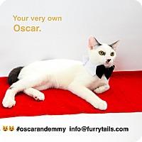 Domestic Shorthair Cat for adoption in Studio City, California - Oscar & Emmy
