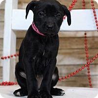 Adopt A Pet :: Destiny - Waldorf, MD
