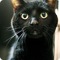 Adopt A Pet :: Delaware - Appleton, WI
