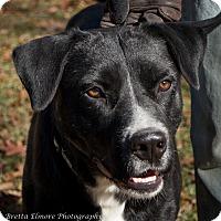 Adopt A Pet :: Benny - Daleville, AL