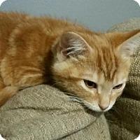Adopt A Pet :: Big Red - Taylor, MI