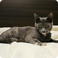 Adopt A Pet :: Fallon - Wayne, NJ