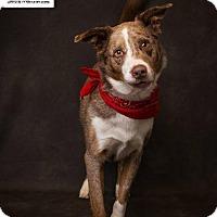 Adopt A Pet :: Solo - Salt Lake City, UT